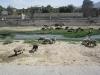 Kabul river okt 2009