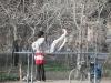 Kabul Shari Now Park 2003